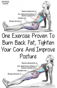 reverse plank to help you burn belly fat